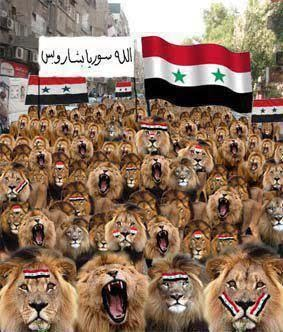 syrian-lions